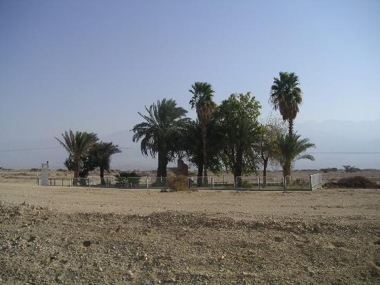 Israel: oasis