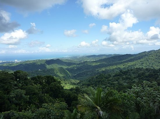 Legends of Puerto Rico: View of rainforest from tower