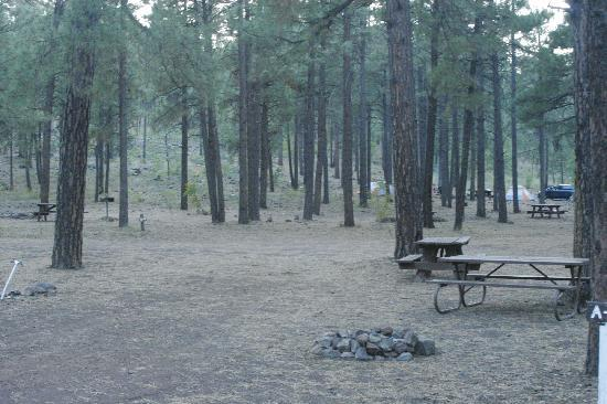 Fort Tuthill County Campground : Nicely Wooded