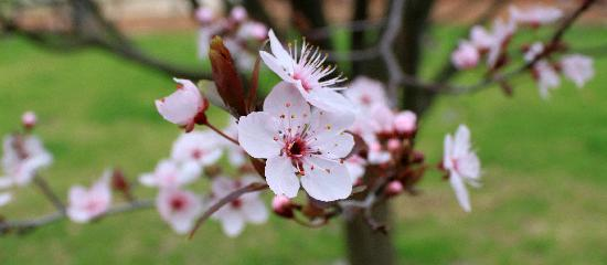 Margaret River Discovery Co. Tours : Sakura at the winery