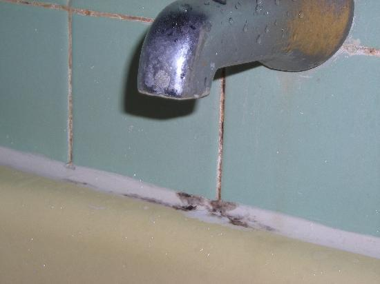 Burlington, WI: Mold in the bathroom