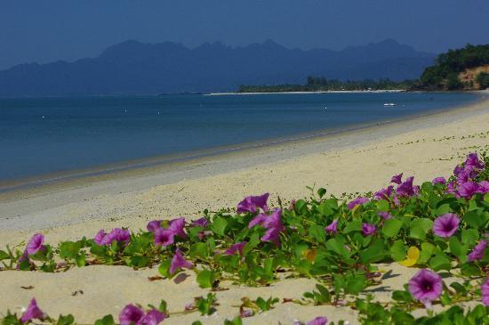 Federal Villa Beach Resort : The beach just near a hotel.