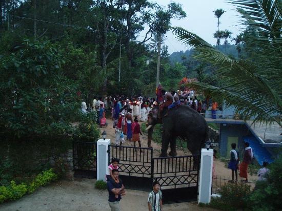 Royal Mist: Festival celebration at Christmas