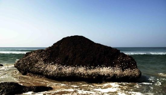 写真Varkala Beach枚