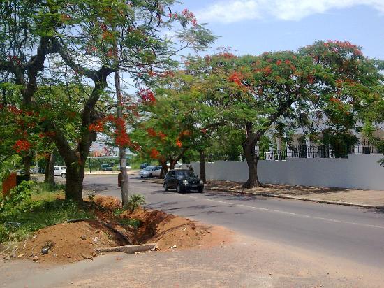 El Arbol De Acacia O Flamboyant Símbolo De Mozambique Picture Of