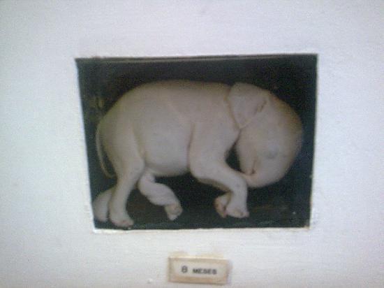 Natural History Museum: Museo de Historia Natural Mozambique feto 8 meses elefante