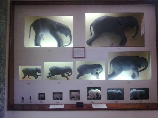 Natural History Museum: Museo de Historia Natural Mozambique fetos de elefante
