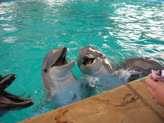 Ramada San Antonio/Near SeaWorld: A great time was had by all