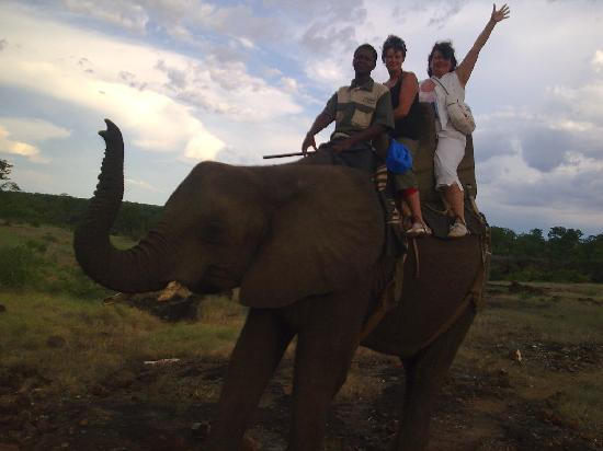 Safari Par Excellence - Elephant Encounter: Safari a lomo de Elefante 1