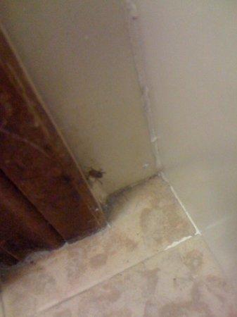 Hotel Sole:                                     un piccolo e poco gradito ospite nel bagno!!!