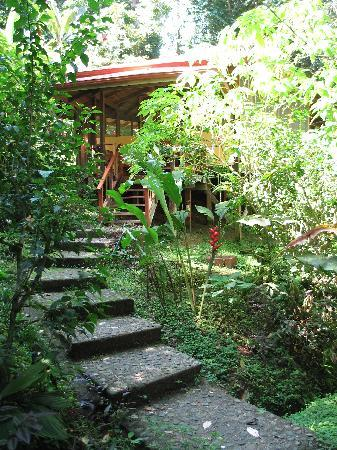Samasati Retreat & Rainforest Sanctuary: Steps leading to the smaller yoga studio