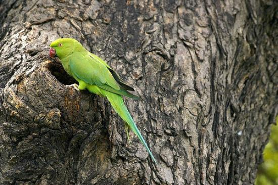 Yeni Delhi, Hindistan: Birds of a feather