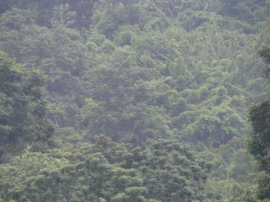 Shillong, India: rain forest!!