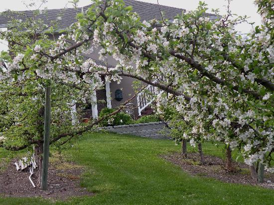 The Del Ray B&B: Blossom time at the del Ray