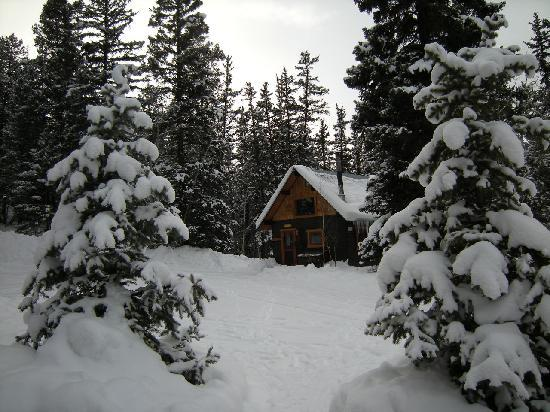 Pioneer Guest Cabins: Another cabin