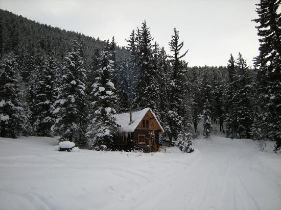 Pioneer Guest Cabins: cabin in the national forest