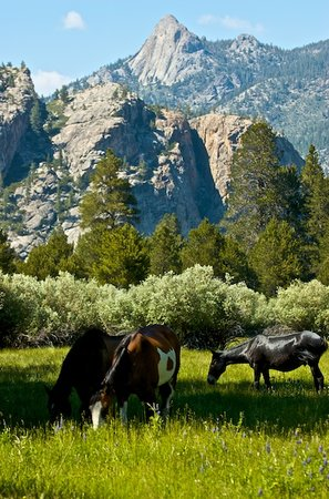 Jackass Meadow Campground: Horses at Jackass Meadow
