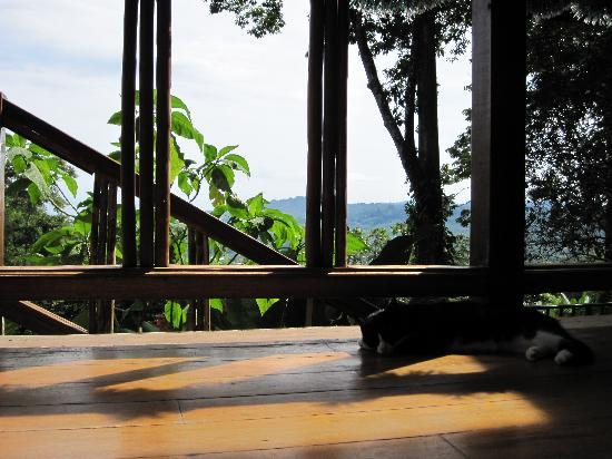 Samasati Retreat & Rainforest Sanctuary: Restaruant View
