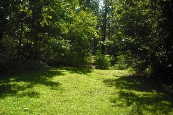 Cherokee Village, AR: The Backyard View!