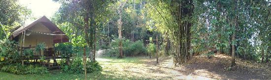Hintok River Camp at Hellfire Pass: green forest outside our tent