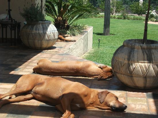 Impangele: Its a dogs life