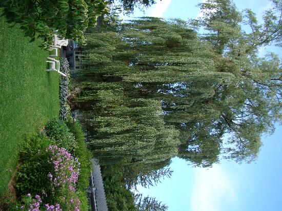 MAPLE TERRACE MOTEL: The magnificent willow tree in the garden.