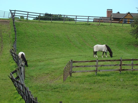 Williamstown, MA: The view from the pool of frolicking horses.