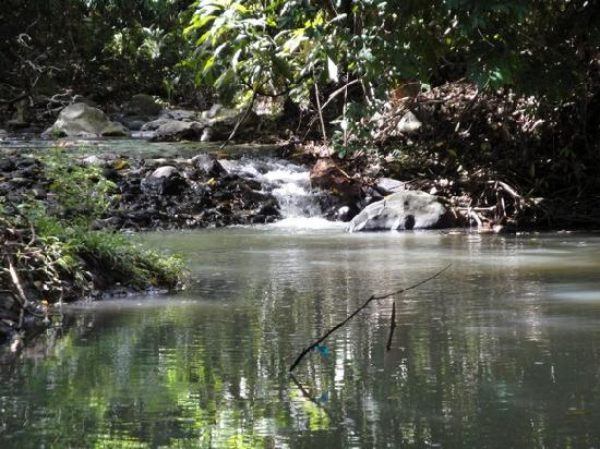 A Peace of Paradise: The Stream at the bottom of the garden
