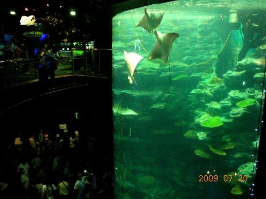 Busan, Südkorea: Haeundae Aquarium, has the biggest aquariums in Korea