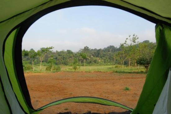 Madikeri, อินเดีย: The view from the tent says it all..