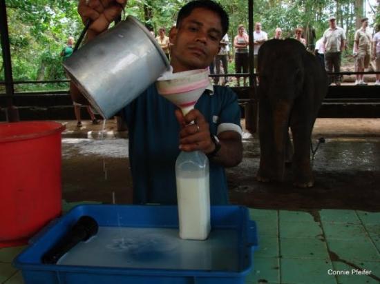 Bentota, Sri Lanka: Pinnawela -Elefantenwaisenhaus