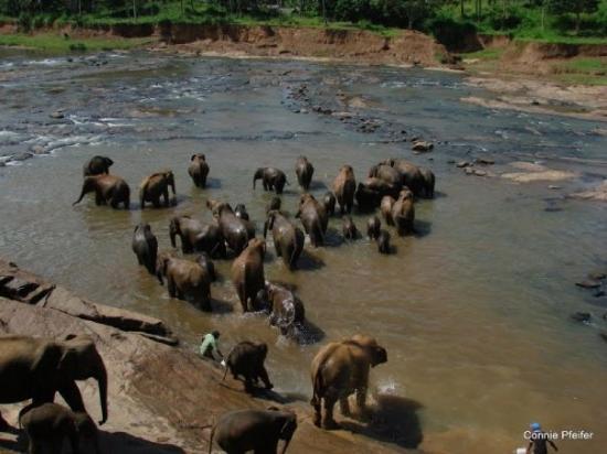 Bentota, Sri Lanka: beim baden