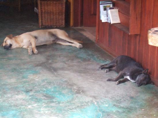 Hotel Banana Azul: Luna and Benji having a tough day