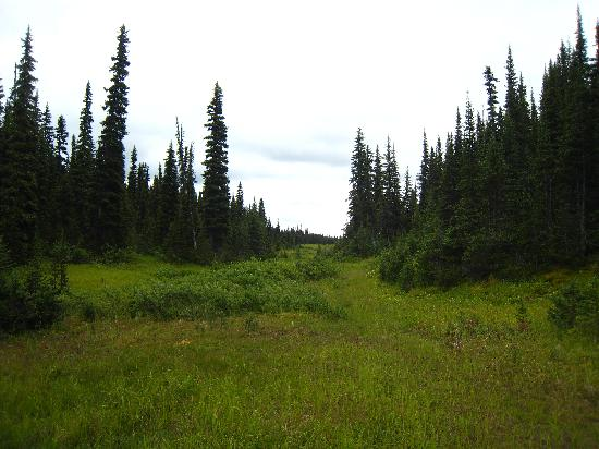 Canadian Country Cabins: plateau of nearby mountain on trail