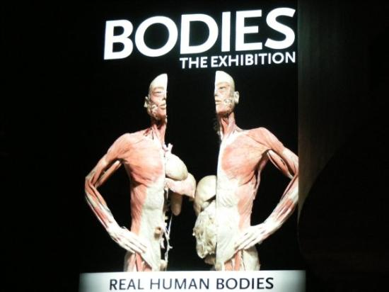 Bodies The Exhibition: This place was very cool (gross.)