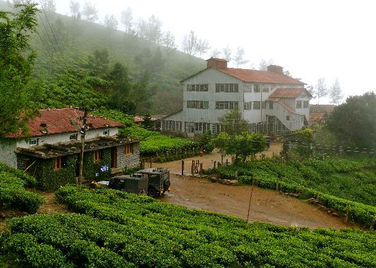 Royal Mist : La plantation de thé à 2600m d'altitude. (Kokullumalai)