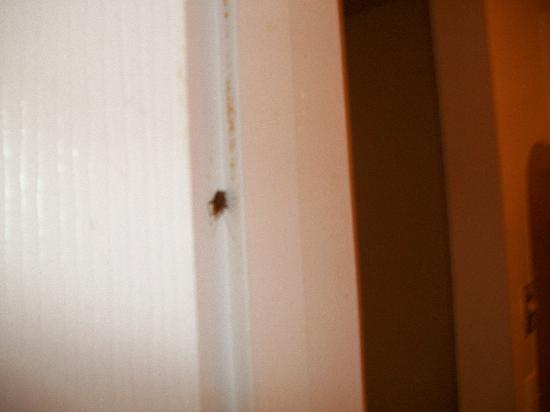 Home 1 Extended Stay Hotel: Cockroach smashed in door jam
