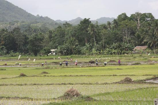 Calape, Philippines: Nearby countryside