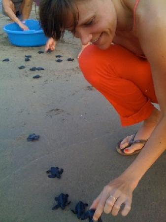 The Inn at Manzanillo Bay: Releasing the baby sea turtles.
