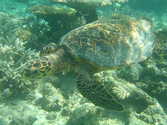 Thudufushi Island: Underwater life amazing