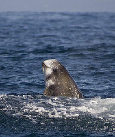 Best Whale Watching Tours In Monterey Ca