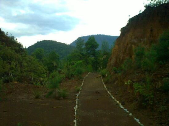Soroako, Indonesia: jalan setapak di bukit butoh (poci)