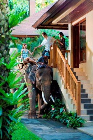 Elephant Safari Park & Lodge: Elephant Chauffeur Service