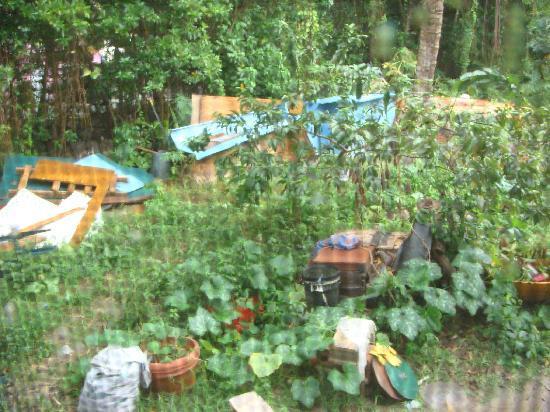Elm Beach Suites: Backyard View