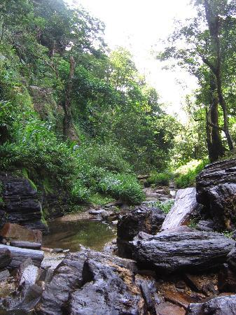 Trinidad and Tobago Waterfalls - Waterfalls in Trinidad  Trinidad And Tobago Maracas Falls