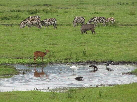 Ngurdoto Lodge: Arusha National Park