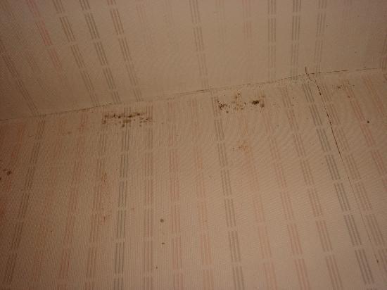Pacific Inn Santa Cruz: Mold growing around shower