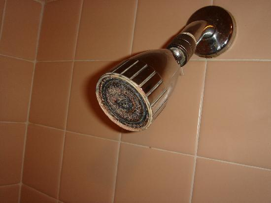 Rusty shower head- 1/3 of the holes allow water through- the rest ...