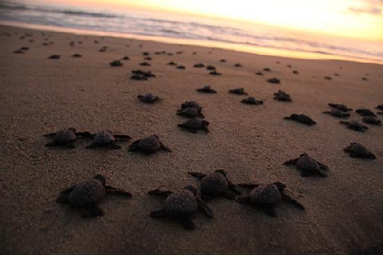 Quinta Lili: Turtles