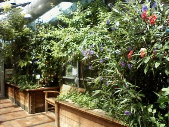 Incroyable Museum Of Science: Butterfly Garden This Is The Exhibit We Saw All The  Moths And